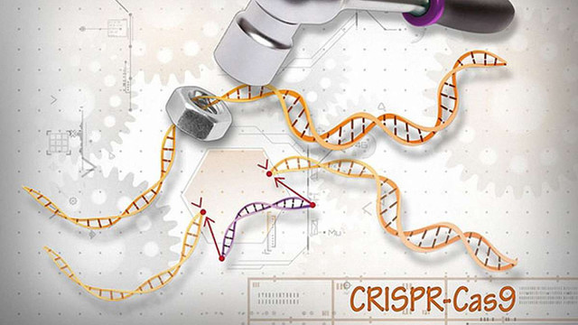 Американські вчені вперше виправили дефектний ген ДНК людського ембріона