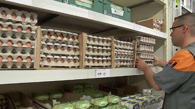 У Нідерландах почали винищувати курей через виявлення токсину у яйцях