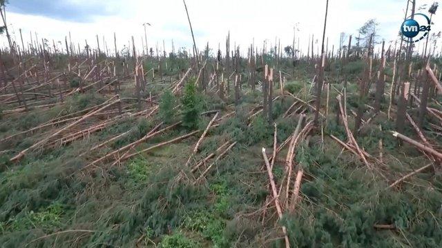 У Польщі показали наслідки буревію, який повалив сотні гектарів лісу