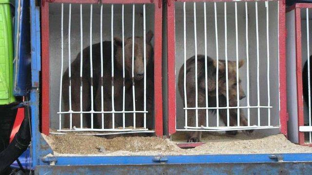 Суд скасував заборону на діяльність пересувних цирків у Львові