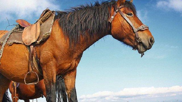 На Івано-Франківщині відроджуватимуть гуцульську породу коней