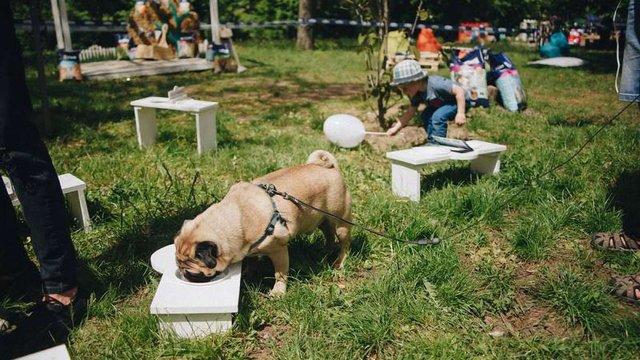 У центральному львівському парку працюватиме мандрівний ресторан для собак
