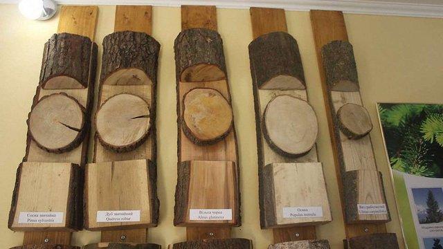 На Львівщині створили музей лісу