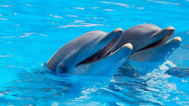 Екологи не змогли в суді довести незаконність діяльності дельфінарію у Трускавці