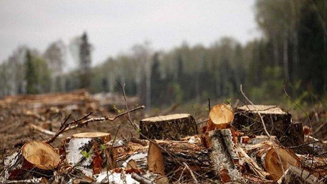 У Дрогобицькому лісгоспі виявили незаконні вирубки дерев на суму понад ₴700 тис.
