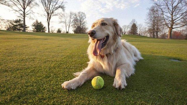 У Львові безкоштовно прочіпують 5 тисяч домашніх собак