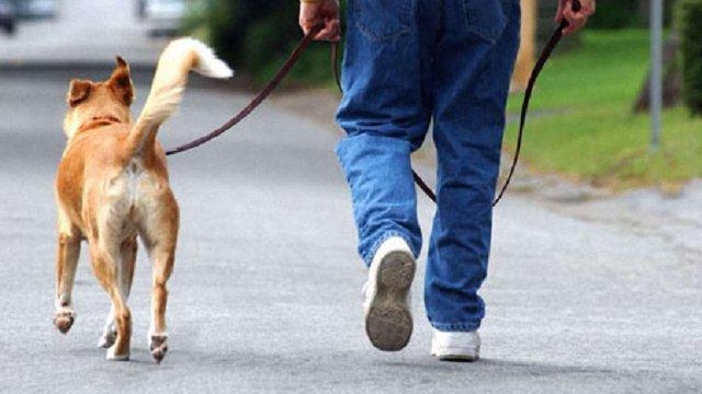 В Києві заборонили вигулювати собак і котів біля шкіл, дитсадків і лікарень