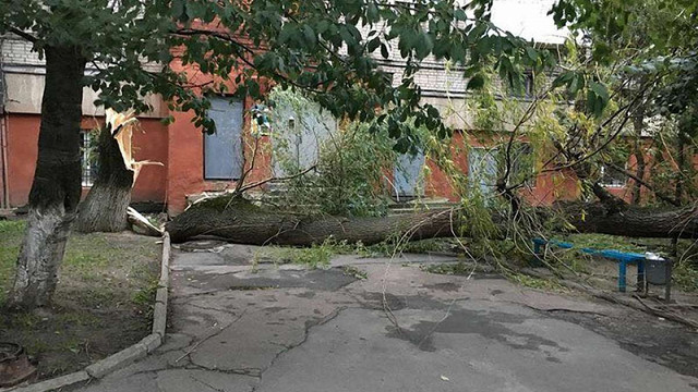 Над Львівщиною пронісся потужний буревій: повалені дерева, обірвані лінії електропередач