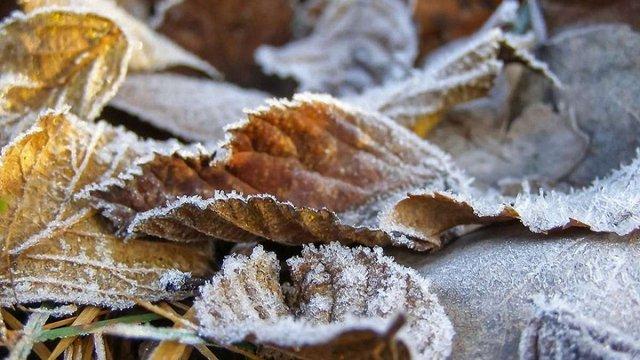 У Карпатах прогнозують мокрий сніг