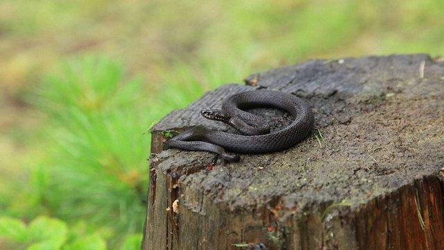 33-річний львів'янин потрапив до реанімації через укус змії
