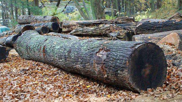 На Сокальщині під час вантаження деревини загинув чоловік