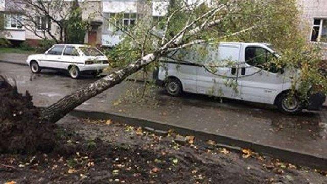 У Львові три автомобілі пошкоджено внаслідок падіння дерев