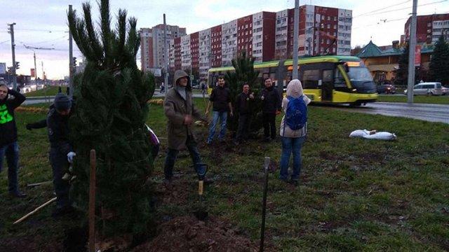 Вздовж трамвайної колії на Сихові посадили 24 дерева