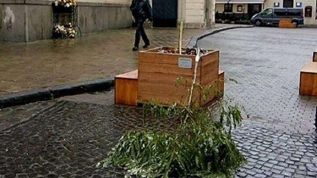 Камери спостереження зафіксували зловмисників, які зламали дерево в центрі Львова