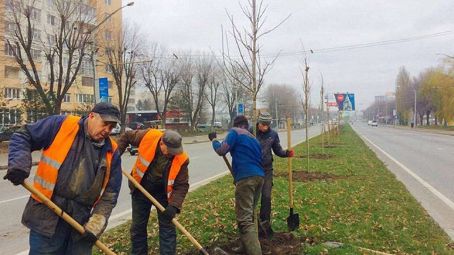 На магістральній вулиці Львова висадили 90 дерев і 110 кущів