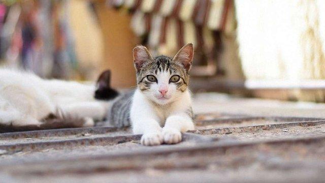 В Одесі депутати визнали котів частиною міської екосистеми