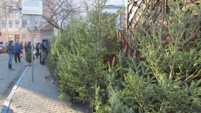 В Україні створили мобільний додаток для перевірки новорічних ялинок