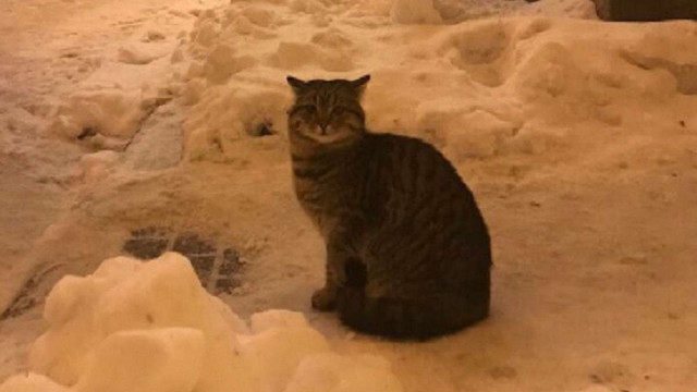 МЗС України «працевлаштувало» кота