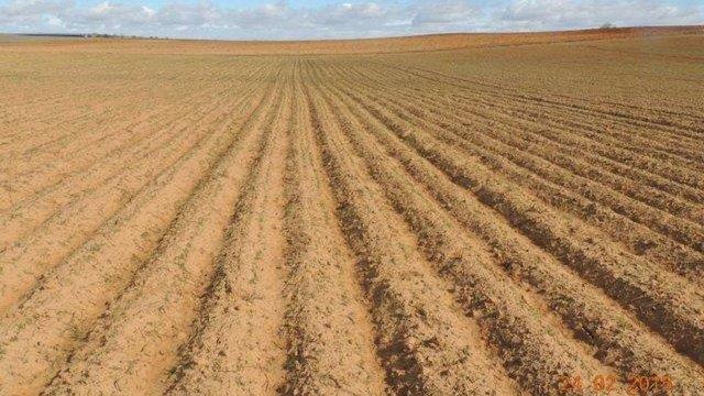 Яворівська РДА здавала в оренду 10 га землі за ₴80 на рік