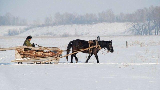 На Львівщині водій автомобіля Fiat наїхав на віз з кіньми