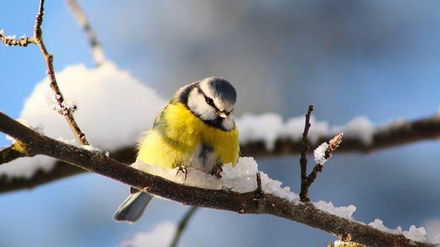Різдвяні вихідні в Україні будуть теплими та дощовими