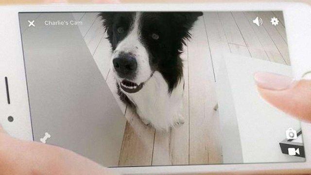 Оновлення стартапу Petcube дозволятиме домашнім тваринам «дзвонити» до своїх господарів