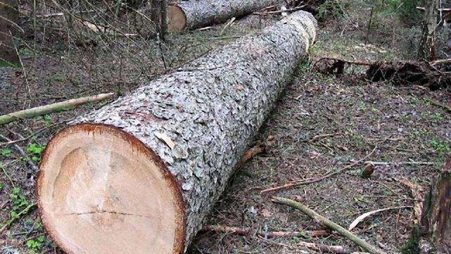 У Кам'янка-Бузькому районі загинув лісничий