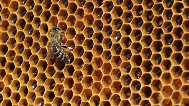 За 10 днів 2018 року Україна використала річну квоту на експорт меду в ЄС