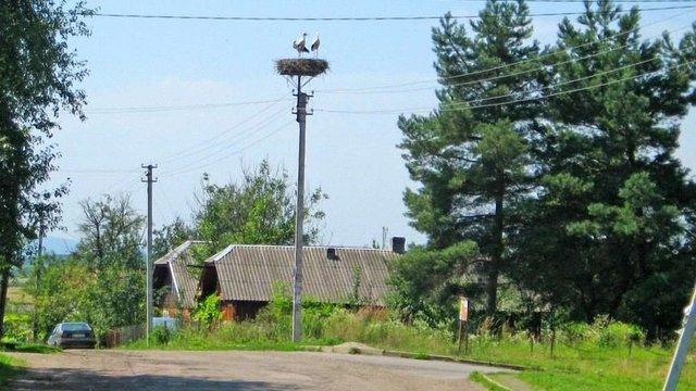 Сільрада в Дрогобицькому районі двічі поспіль незаконно здала в оренду земельні ділянки
