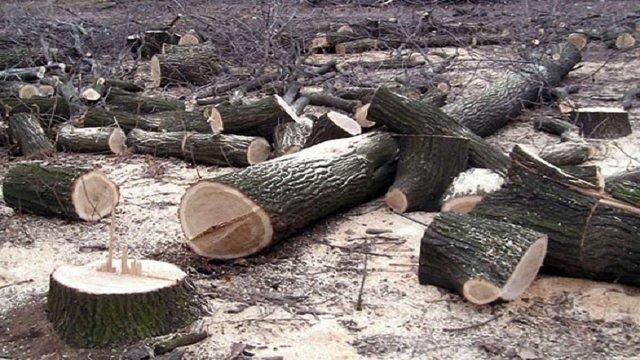 На Львівщині майстрові лісу повідомлено про підозру через незаконну вирубку дубів