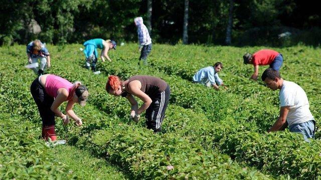 Українці стали втричі частіше скаржитися на своїх працедавців в Польщі