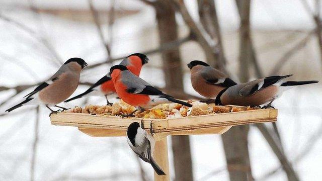 На Львівщині за зимову підгодівлю птахів обіцяють  призи