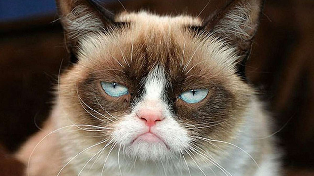 Власниця відомого в інтернеті «Сердитого кота» відсудила $710 тис. за бренд