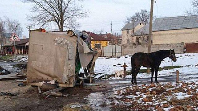 У ДТП на трасі Київ-Чоп загинув цирковий кінь