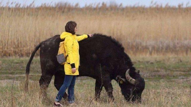 «Дорога українських слонів» від ZAXID.NET перемогла у конкурсі ООН про зміни клімату