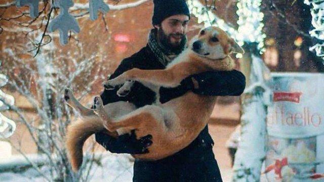 За рік у Львові знайшли нових власників для 480 безпритульних собак і 65 котів