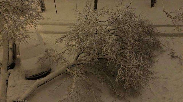 Через сильний снігопад у Львові впало 10 дерев