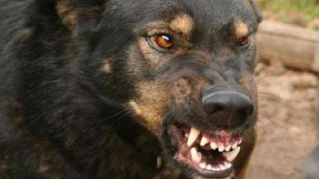 У Бориславі собака сильно покусав 94-річну господиню