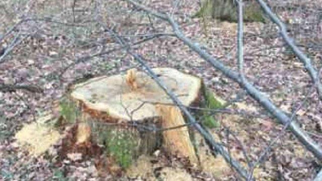 На Стрийщині екологи виявили незаконну вирубку понад тисячі дерев