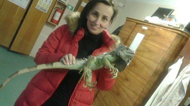 У Львові біля смітника знайшли живу ігуану