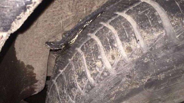 На Закарпатті водій домігся в суді компенсації за пошкодження авто через ями на дорогах