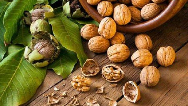 В Україні збільшуються площі насаджень волоських горіхів та ліщини