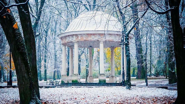 На закупівлю саджанців для парків у Львові витратять ₴930 тис.