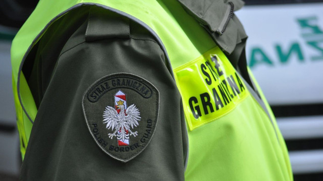 Українці намагалися нелегально вивезти до Польщі кошенят, 15-ть з них виявили мертвими в багажі