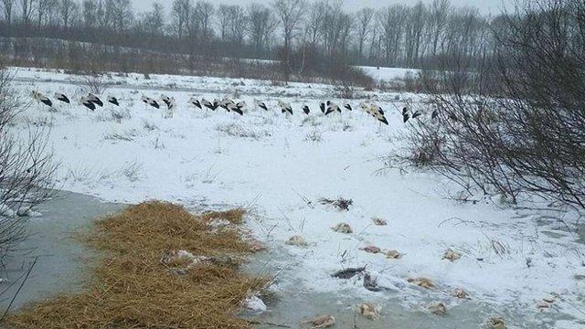 У Мостиському районі рятувальники нагодували лелек та облаштували місця для їхнього перебування