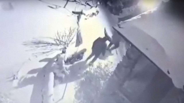 Розбійна банда з Львівщини напала на будинок фермера на Волині