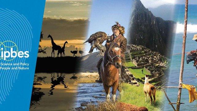 ООН попередила, що до 2100-го року в Африці вимре половина видів тварин