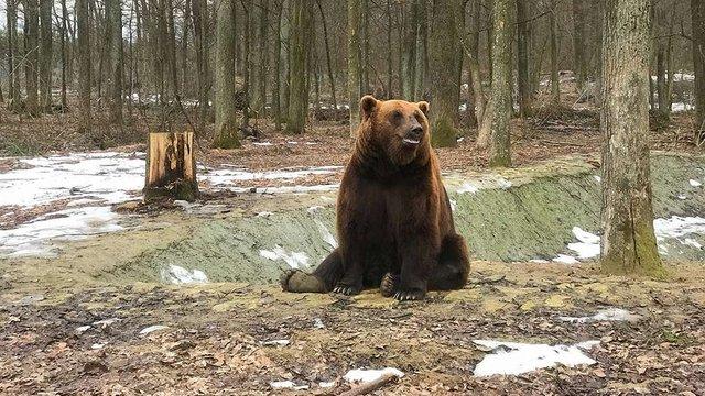 Ведмежий притулок «Домажир» співпрацюватиме з Яворівським природним парком