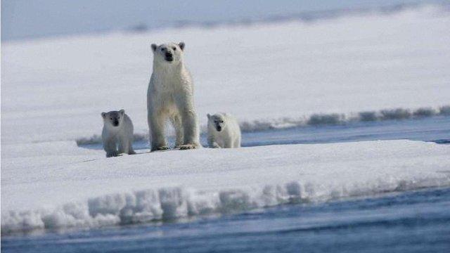 NASA заявило про рекордне скорочення площі льодовиків в Арктиці