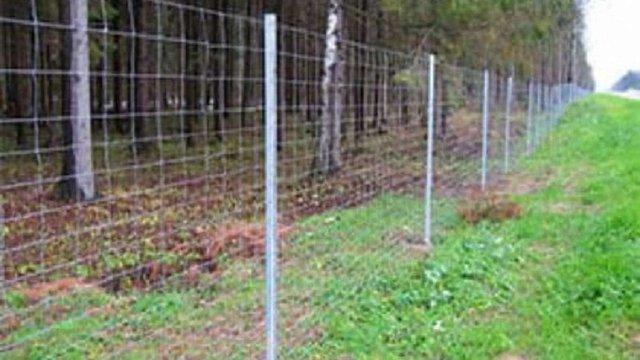 Польща у вересні почне будівництво паркану проти кабанів на кордоні з Україною